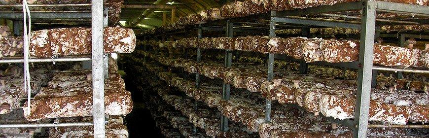 和良農産の菌床椎茸